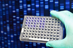 DNA testing in the laboratory. Royalty Free Stock Photography