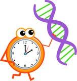 Dna time. Mr clock man holding a dna gene strand Stock Photos