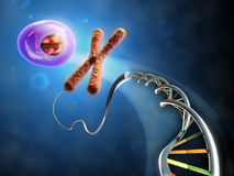 From Dna to cell. Illustration showing the formation of an animal cell from dna and chromosomes. Digital illustration Stock Photo