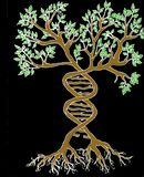 DNA AND TREE stock illustration