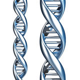 DNA. Two DNA helix on white background Stock Photography