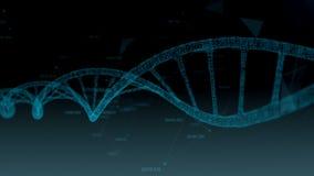 DNA umano Fondo astratto con il plesso Animazione del ciclo royalty illustrazione gratis