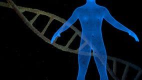 DNA und blauer Mensch Stockfoto