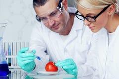 DNA van de tomaat Stock Afbeeldingen
