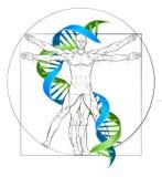 DNA van de Vitruvianmens Stock Foto