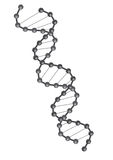 DNA vector. Crossed double Helix DNA strand in white background, vector Stock Photo