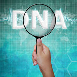DNA , word in Magnifying glass Royalty Free Stock Images