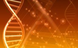 DNA y molécula Fotos de archivo