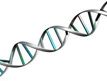DNA-Zeichenketteweiß siolated Stockbilder
