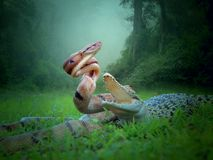 Dnake et crocodile d'og de Batle image libre de droits