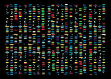 DNAresultat Royaltyfria Bilder