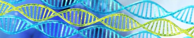 DNAspiral, tolkning för RNA 3d Royaltyfri Fotografi