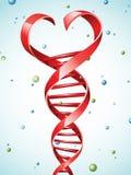 DNAtråd i en form av en hjärta Arkivfoto