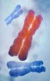 DNAtrådmodell Royaltyfria Bilder