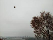 Dnepr de niebla fotos de archivo libres de regalías
