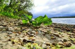 Dnepr flod Royaltyfria Bilder