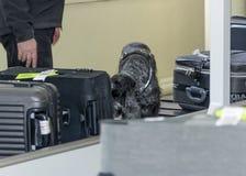 DNEPR, UCRANIA - INVIERNO, 2019: Aeropuerto internacional Control de seguridad de vuelo Maletas entrenadas del perro el oler del  foto de archivo