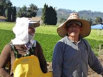 Dni laborers dobierają się w pracować pola Carpentria w Ventura okręgu administracyjnym, Kalifornia Zdjęcie Stock