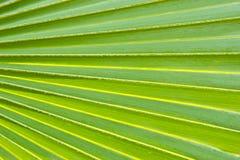 dni liści palm sunny zabrać Zdjęcia Stock