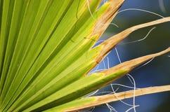 dni liści palm sunny zabrać Zdjęcie Stock