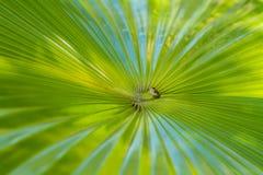 dni liści palm sunny zabrać Zdjęcia Royalty Free