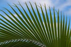 dni liści palm sunny zabrać Obraz Stock