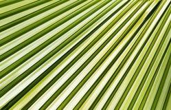 dni liści palm sunny zabrać Fotografia Stock