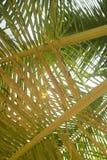 dni liści palm sunny zabrać Obraz Royalty Free