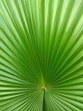 dni liści palm sunny zabrać tło abstrakcyjna green Zdjęcie Stock