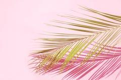 dni li?ci palm sunny zabra? obraz royalty free