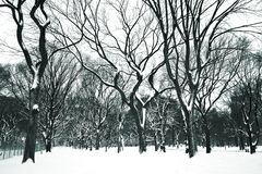 dni parku centralnego śnieg Fotografia Stock