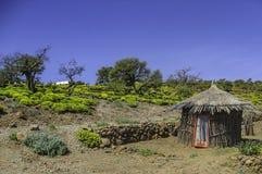Dnia Forrest krajobraz w Djibouti Fotografia Stock