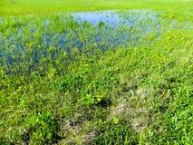 Dnieper沼泽 免版税图库摄影
