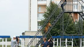 Dnipro, Ουκρανία 7 Αυγούστου 2018: Αναρρίχηση των σκαλοπατιών στις σειρές μαθημάτων εμποδίων στο τρισδιάστατο εθνικό πρωτάθλημα κ απόθεμα βίντεο