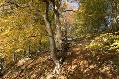 Dänische Autumn Forest Stockfotografie