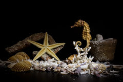 Dno morskie fotografujący Zdjęcie Stock