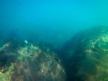 Dno morskie z rybą i skałami obraz stock