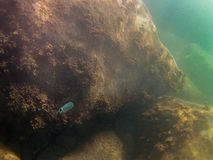 Dno morskie z rybą i skałami fotografia stock