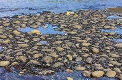 Dno morze po niskiego przypływu Obrazy Royalty Free