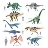 Dnosaurs seletons silhouettes bone animal and jurassic monster predator dino vector flat illustration. Reptile paleontology old bones Stock Image