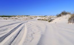 Doñana. Royalty Free Stock Images