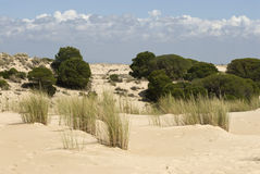 Doñana dunes Royalty Free Stock Photo