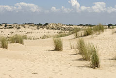 Doñana dunes Royalty Free Stock Images