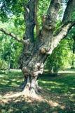 dołączający eps10 fantazi kartoteki drzewo Zdjęcia Royalty Free