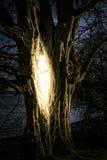 dołączający eps10 fantazi kartoteki drzewo Zdjęcie Royalty Free