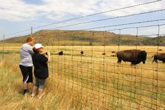 Do búfalo fim acima fotografia de stock royalty free