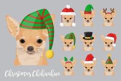 Do cão festivo da chihuahua do Natal chapéus vestindo da celebração Fotos de Stock