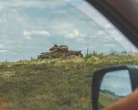 Do carro você pode ver o tanque oxidado destruído imagem de stock