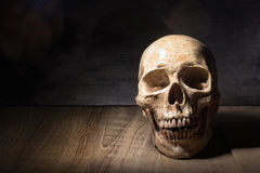 Do crânio vida ainda na placa de madeira Imagem de Stock