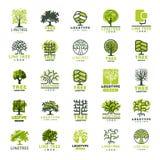 Do crachá exterior da floresta da silhueta do verde do curso da árvore linha natural conífera vetor da coleção do crachá do logot Fotos de Stock